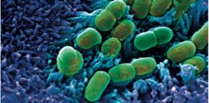 bactéries